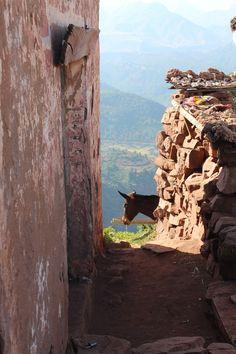 Donkey in Atlas Mountains - Morocco - Courtesy of TravelXena.com