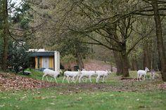 Spot de witte herten op het park.
