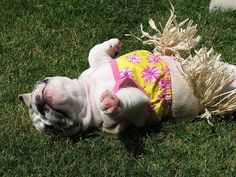 Soaking up some rays in an adorable hula girl outfit.
