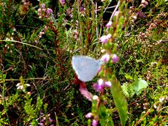 a healthy walk in the mountains 20.8.15 Claudia e Simon Claudia's Secrets School of life - chasing a small butterfly2