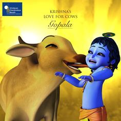 Krishna is addressed in the vedas as go brahmana hitaya ca. The well-wisher of the cows and the Brahmins. He spent His entire childhood tending cows in the cowherd community of Maharaja Nanda. Anyone who serves cows attracts the attention of Krishna. #HappyJanmashtami