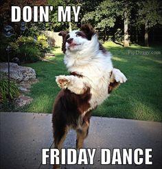 dog meme, friday dance, TGIF