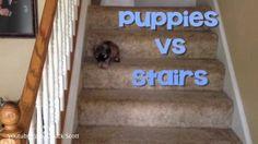 Los cachorros y las escaleras