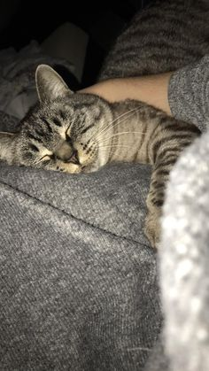She is very tired from her long day of sleeping Cute Baby Cats, Cute Baby Animals, Cute Babies, Funny Animals, Creative Instagram Stories, Instagram Story, Rauch Fotografie, Cool Girl Pictures, Cute Girl Photo