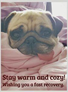 Send Free Stay Warm and Cozy - Get Well Card to Loved Ones on Birthday & Greeting Cards by Davia. It's free, and you also can use your own customized birthday calendar and birthday reminders. Funny Daily Quotes, Daily Motivational Quotes, Happy Quotes, Inspirational Quotes, Quotes Positive, Meaningful Quotes, Hope Youre Feeling Better, Feeling Sick, Feel Better