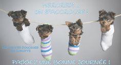 Mercredi... on s'accroche ! Passez une bonne journée ! #mercredi chiens chiots chaussettes mignon drole