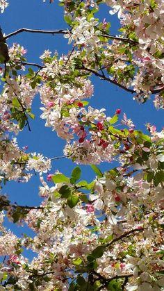 Flowersingreece
