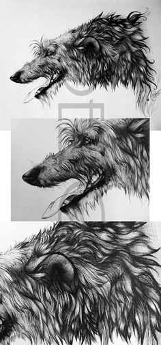 Ball point pen drawing of a Scottish Deerhound. By Dezzoi