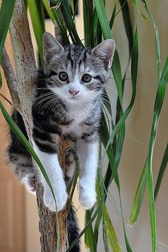Sweet kitten investigating!