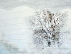 Rebecca Norris Webb, Morning Snow