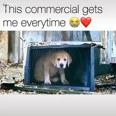 Funny Animal Memes, Funny Animal Videos, Funny Dogs, Animal Humor, Dog Videos, Dog Memes, Cute Little Animals, Cute Funny Animals, Funny Cute