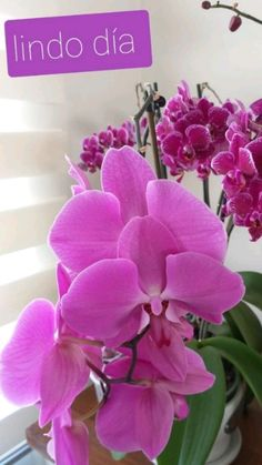 Blue Orchids, Yellow Flowers, Good Morning Images Flowers, Planting Shrubs, Good Night Image, Orchid Care, Flower Wallpaper, Good Morning Quotes, Kawaii Anime