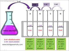 Serial dilution Procedure diagram