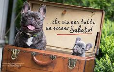Let us help you make dog travel easy! Travel Logo, Dog Travel, Travel Luggage, Gadgets Électroniques, People Fly, Fun Snacks For Kids, Kids Videos, Brown Bear, French Bulldog