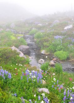 getting more foggy Cocoa Dream (Source: unusualyoung, via mayinthebluesky) Beautiful World, Beautiful Places, Peaceful Places, Simply Beautiful, Beautiful Pictures, Field Of Dreams, Love Garden, Beautiful Landscapes, The Great Outdoors
