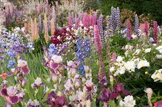 Cottage garden with lupine, iris, columbine, poppy and delphinium