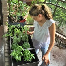 CREA CON TU HIJOS UN HUERTO DE OTOÑO #huertourbaho #mesadecultivo #jardineria #terraza #balcon #verde #aromaticas