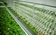 PodPonics: Lettuce Think Differently About Farming in Cities