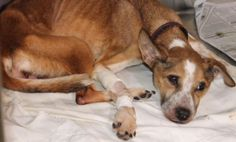 A dog was found abandoned at a home on the East Side of San Antonio. Animal Care Services received a report of a possible animal cruelty case from a landl...