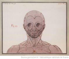 [Ecorché, vue de face] : [dessin] / Jn Jques Le Queu delin. 1792 - 1