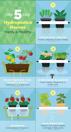 Food to grow using hydroponics