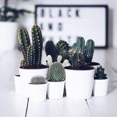 Cactus cactus #cactus #planta #plant #inlove #decor #decoração #love #amor #vaso #desk #homeoffice #photo #photooftheday #foto #instagood #instacool #instago #instagram by babsnassar