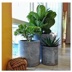 Cement pots and plants. JF