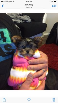 Yorkshire Terrier, Yorkie, Baby, Yorkshire Terriers, Yorkies, Teacup Yorkie, Baby Humor, Infant, Babies