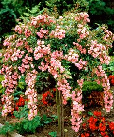 Pink Cascading Rose Tree