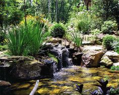 yard waterscapes - Google Search