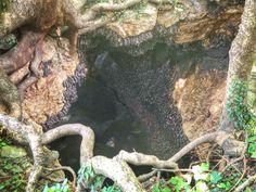 The Monfort Bat Cave @ Samal Island, Davao, Philippines. Davao, Philippines, Island, Explore, Travel, Viajes, Islands, Destinations, Traveling