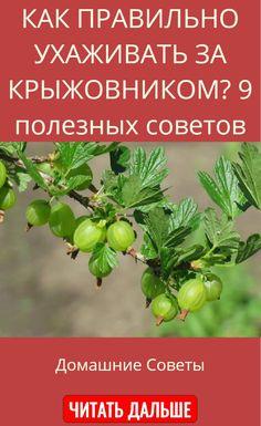 Small Farm, Food Photography, Healthy Eating, Herbs, Homemade, Garden, Plants, Eating Healthy, Garten