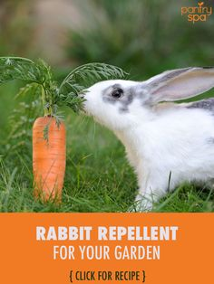 Liquid fence recipe a natural way to repel rabbits and - How to keep deer out of garden home remedies ...