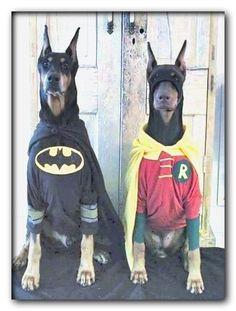 homemade dog costumes crafts