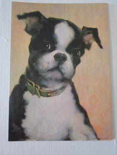 Vintage Litho Print Miniature Boston Bull Pup Title Artist Unknown | eBay