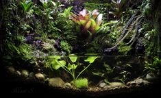Paludarium with 16 different species of orchids, plus tillandsia and other goodies.