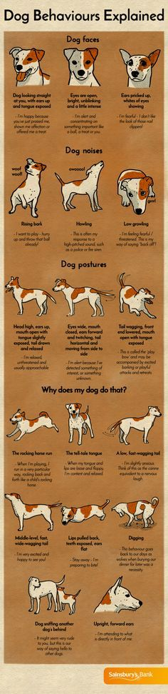 In order to really understand what your dog is trying to tell you, it's important to observe their body language and listen to the noises they make. You may think you know exactly what your dog is saying by wagging its tail, for example. But were you aware that this can signify a number of feelings - from excited, playful or attentive, to apprehensive and even slightly nervous?