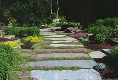 Natural Landscape with Natural Garden Pathway & Perennial Garden in Saddle River, Bergen County , NJ.