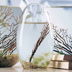 EcoSphere Self-Sustaining Tiny Ecosystem Enclosed in Glass