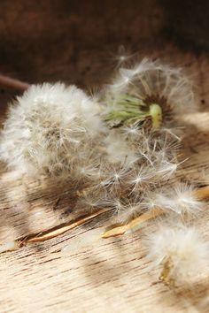 Ana Rosa, via:http://idemakeriet.blogspot.com.br