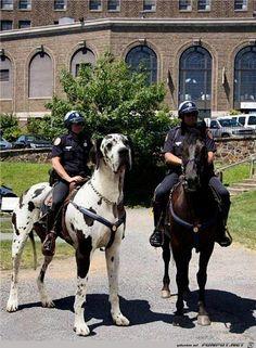 lustiges Bild 'Pferdersatz.jpg'- Eine von 21313 Dateien in der Kategorie 'witzige Bilder' auf FUNPOT.