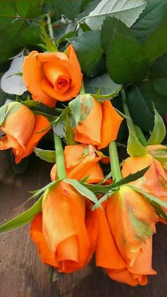 Happy Orange. . .༺Aline ♥ #flowers #fleurs