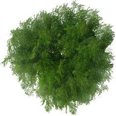 blog-images-detourees-4-vegetation-arbre-dessus-1.png (500×500)