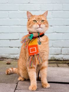 Before you defrost the turkey and welcome guests read these Thanksgiving safety tips all cat lovers should keep in mind this holiday. I Love Cats, Cool Cats, Street Cat Bob, Curious Cat, Orange Cats, Small Cat, Ginger Cats, Cat Names, Halloween Cat