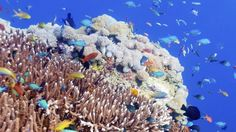 Marine protected areas all around the world are designed to .... and yet they are failing to protect most of the evolutionary diversity of the world's coral and fish, a new study has found.