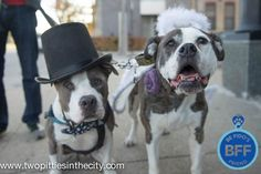 Things to do with Dogs in Chicago: Miss M and Mr B go Dog Trick-or-Treating (with Be Fido's Friend!)