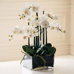 With its lush, wide petals, tall stems and striking yellow centers, the Faux Orchid Phalaenopsis Arrangement in Square Vase makes a captivating accent. Orchid Flower Arrangements, Orchid Centerpieces, Artificial Flower Arrangements, Square Glass Vase, Round Glass Vase, Faux Flowers, Silk Flowers, White Flowers, Phalaenopsis Orchid