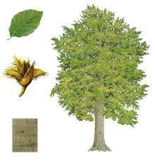 strom - Hľadať Googlom