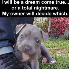 my owner will decide which