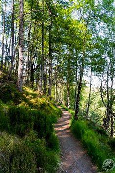 The path alongside Corrieshalloch Gorge (Scotland)